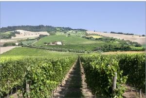 wijngaard Fazi Battaglia