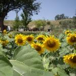Kamperen op Landgoed I Magnoni