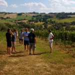 wijnreis la maddalena